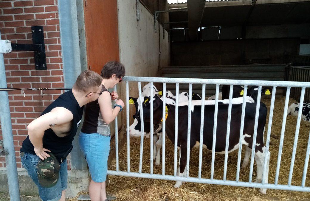 Bezoek aan de melkveehouderij